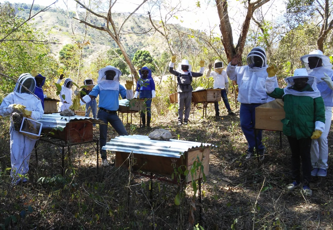 Training Apiary